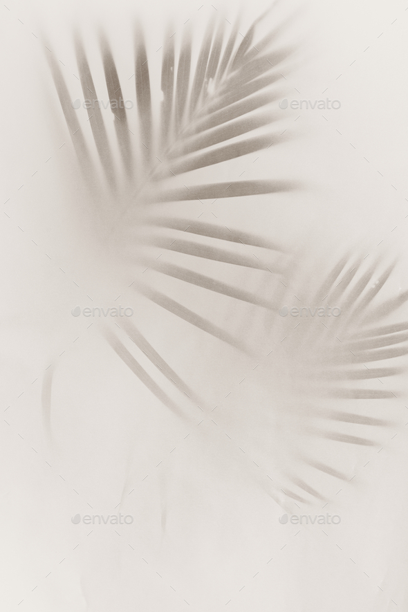Blurred green palm leaves on off white background - Stock Photo - Images