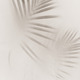 Blurred green palm leaves on off white background - PhotoDune Item for Sale