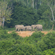 Thai Elephant in the nature of Kui Buri National Park - PhotoDune Item for Sale