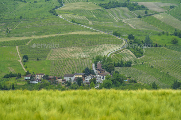 Vineyards in Oltrepo Pavese, italy, at springtime - Stock Photo - Images