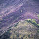 A mountain path crosses a slope covered in purple heather - PhotoDune Item for Sale