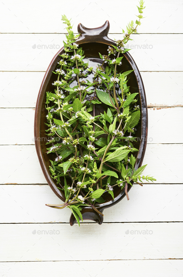Fresh blooming mint - Stock Photo - Images