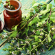 Fresh blooming mint - PhotoDune Item for Sale