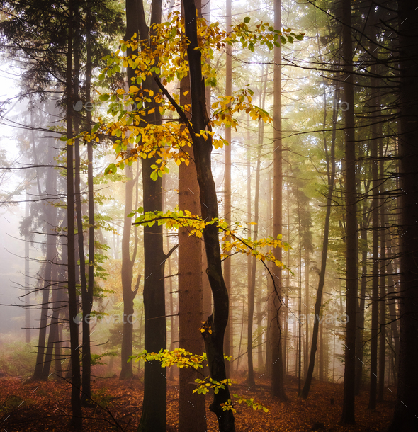 Enchanted forest in autumn - Stock Photo - Images