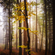 Enchanted forest in autumn - PhotoDune Item for Sale