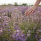 Dreamy teenager girl walks in lavender field and touches purple flowers with fingers. Summer nature - PhotoDune Item for Sale