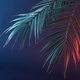 Palm tree in neon at a party in vintage style. Neon jungle and modern dark minimal concept. - PhotoDune Item for Sale