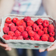 Girl picking raspberries and showing in hands - PhotoDune Item for Sale