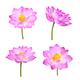 set of lotus flower isolated on white - PhotoDune Item for Sale