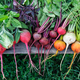 Organic beets and carrots of different varieties with edible herbs - PhotoDune Item for Sale