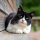 Black and white cat - PhotoDune Item for Sale