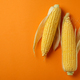 Fresh raw corn on orange background, space for text - PhotoDune Item for Sale