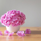 Pink hydrangea in white flowerpot - PhotoDune Item for Sale
