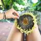 Female hand picking the organic sunflower seeds - PhotoDune Item for Sale