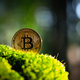 Golden bitcoin coin on lush green moss - PhotoDune Item for Sale