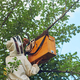 Beekeeper putting beehive from tree into box - PhotoDune Item for Sale