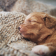 Cute puppy sleeping on blanket at home - PhotoDune Item for Sale