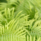 Green fern in the forest - PhotoDune Item for Sale