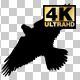 Flying Eagle Silhouette - VideoHive Item for Sale