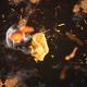 Skull Fire Logo Reveal - VideoHive Item for Sale
