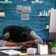 Disappointed exhausted black student sleeping on desk table in living room overworking remote from - PhotoDune Item for Sale