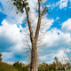 A Single Tree Standing Alone with Blue Sky and Grass. - PhotoDune Item for Sale