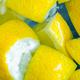 water with lemon slice. Fresh lemon in water - PhotoDune Item for Sale