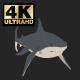 Cartoon Shark - VideoHive Item for Sale