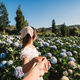 Young couple traveler relaxing and enjoying with blooming hydrangeas flower field - PhotoDune Item for Sale