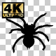 Hand Drawn & Silhouette Spider Animation - VideoHive Item for Sale