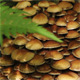Group Of Mushrooms - VideoHive Item for Sale