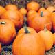 Halloween pumpkins on hay. - PhotoDune Item for Sale
