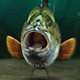 Fishing Opener DR - VideoHive Item for Sale