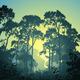 Forest Landscape - GraphicRiver Item for Sale