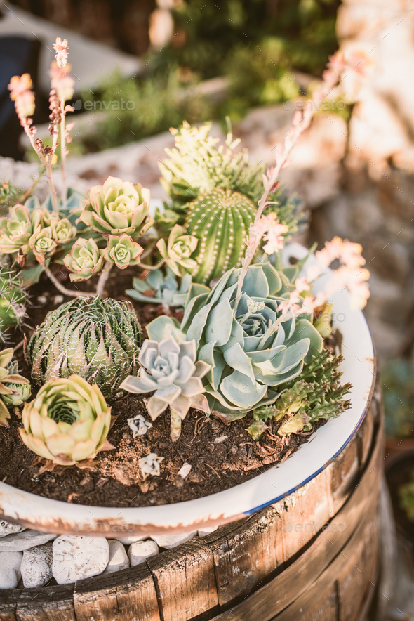 Group of succulent and cacti plants - Stock Photo - Images