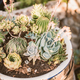 Group of succulent and cacti plants - PhotoDune Item for Sale