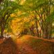 Maple Corridor near Kawaguchi Lake and Mt. Fuji, Japan - PhotoDune Item for Sale