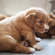 Group of cute puppies - PhotoDune Item for Sale