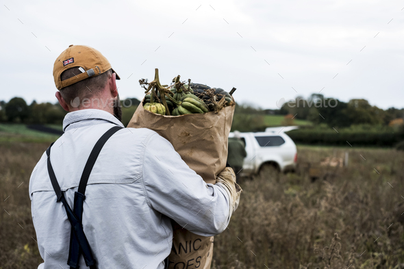 Farmer walking in a field, carrying paper bag with freshly picked gourds. - Stock Photo - Images