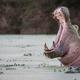 A hippo, Hippopotamus amphibius, yawns in a green waterhole - PhotoDune Item for Sale