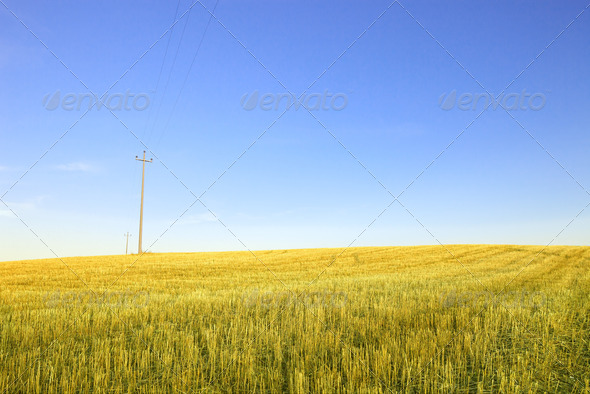 Harvested wheat field, electric power line and  blue sky - Stock Photo - Images