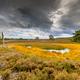 Fen in nature reserve Tongerense heide - PhotoDune Item for Sale