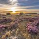 Beautiful landscape scenery of heathland - PhotoDune Item for Sale