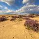 Lovely landscape scene of heathland - PhotoDune Item for Sale