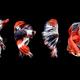 Beautiful red, blue and white Betta splendens - PhotoDune Item for Sale