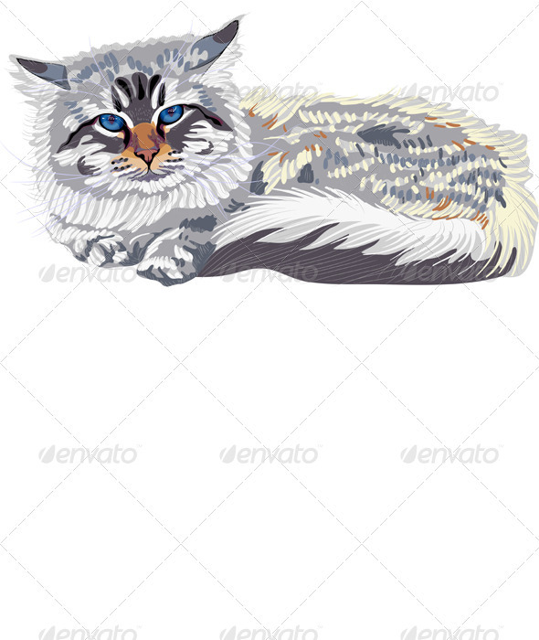 Vector Sketch the Cat Breed Siberian Cat - Animals Characters