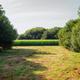 Small corn plantation between trees - PhotoDune Item for Sale
