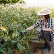 Hispanic woman farmer working at urban garden harvesting fresh eggplants and vegetables - PhotoDune Item for Sale