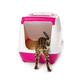 Bengal kitten enters an enclosed litter box through a hanging door. - PhotoDune Item for Sale