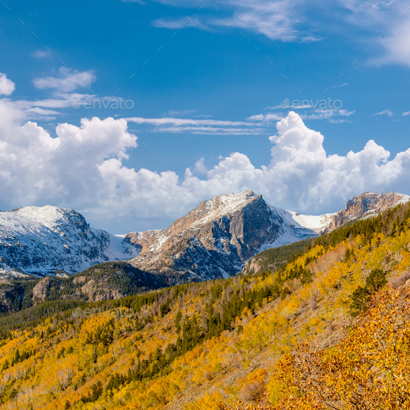 Aspen grove at autumn in Rocky Mountains - Stock Photo - Images